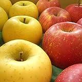 訳あり りんごおすすめ2品種詰合せ Cランク (家庭用) 約3kg [CA貯蔵] 長野産 (9玉~11玉)