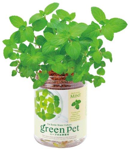 育てるグリーンペット ハーブ ミント GD-44401