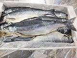 北海道産 塩マス 3特 約8尾 7.5kg 塩鱒 塩ます