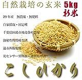 【酵素玄米に最適】【最高品質】29年産・自然栽培コシヒカリ玄米(無肥料)5kg・自家採取・固定種・放射性物質検査済・異物混入処理済・遠赤外線乾燥