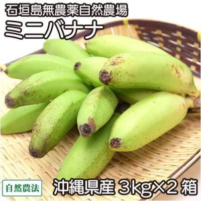 ミニバナナ 3kg×2箱 自然農法 (沖縄県 石垣島無農薬自然農場) 産地直送 ふるさと21