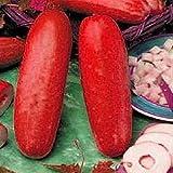 30個赤いキュウリの種子フルーツ野菜の種子レア植物盆栽ホームガーデン