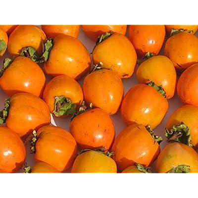 (訳あり) 岩手県産 蜂屋柿 (渋柿) 10kg