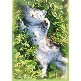 キャラクタースリーブコレクション 猫 「アメリカン・ショートヘアー」