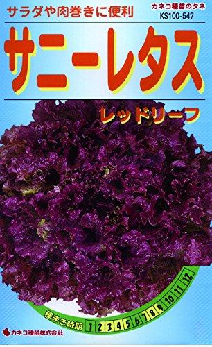 カネコ種苗 野菜タネ547 サニーレタス レッドリーフ 10袋セット