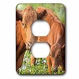 3dローズLSP _ 250733_ 6レッドAngus Cow And Calf飲料水から池、フロリダ州2プラグコンセントカバー