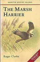 The Marsh Harrier
