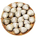 ホンビノス貝 千葉県産 内房 東京湾 ハマグリの代用 安い バーベキュー 行楽 貝 出汁 クラムチャウダー 酒蒸し