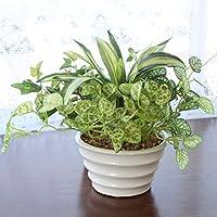 山久 ドラセナ ミックスポット VG3596 1403-3008 CT触媒加工 人工観葉植物 造花