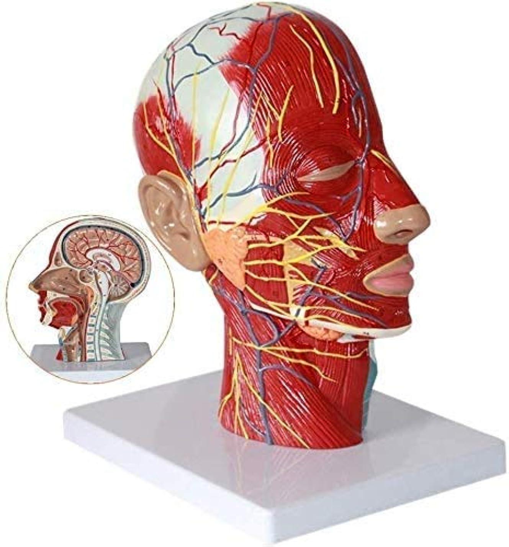 スクランブルコンピューターゲームをプレイする地区人事モデルのボディ解剖脳の学習モデルの教育モデル実験室モデル視床