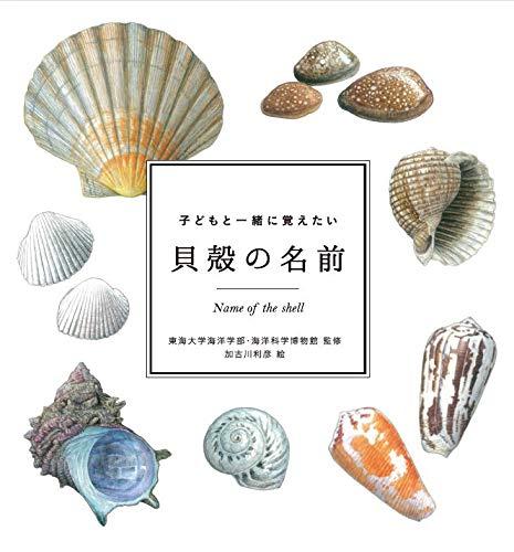 子どもと一緒に覚えたい 貝殻の名前 (子どもと一緒に覚えたいシリーズ)