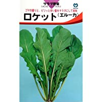 西洋野菜 種 【 ロケット 】 種子 小袋(約2ml)