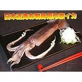 日本海近海で獲れた新鮮な刺身スルメイカ!日本近海刺身用船内冷凍イカ 1尾