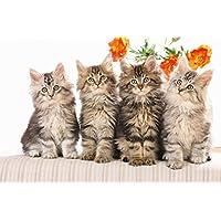 かわいい猫の動物 - #27947 - キャンバス印刷アートポスター 写真 部屋インテリア絵画 ポスター 90cmx60cm