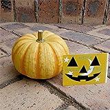 ハロウィン用おもちゃかぼちゃ:プッチィーニLシール付 3個セット(直径10?12cm) ノーブランド品