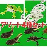 ネイチャーテクニカラーMONO PLUS ヒキガエルとアマガエル ボールチェーン&マグネット [アソート4種セット (1.アマガエル/2.卵塊/3.オタマジャクシ (幼生1&幼生2)/4.オタマジャクシ (幼生3&幼体))]