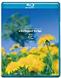 5.1ch SURROUND SOUND virtual trip 花 Flowers 四季の山野草と高山植物[PCXP-10057][Blu-ray/ブルーレイ]