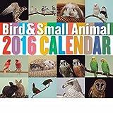 バード&スモールアニマルカレンダー 2016年