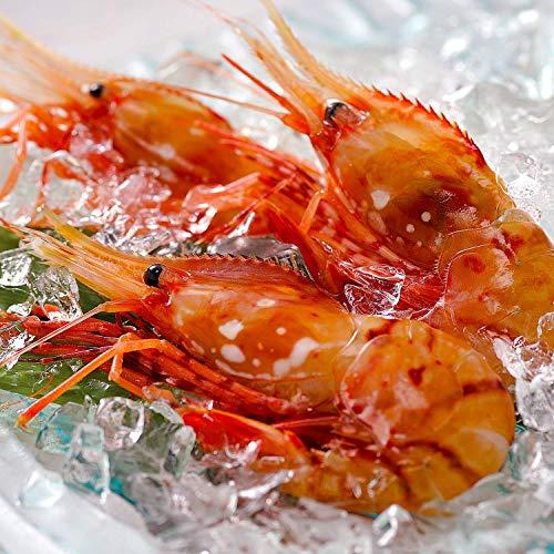 ボタンエビ 天然 特大 生ぼたんえび お刺身 お寿司 海鮮丼 (500g 15-20尾 ギフト)