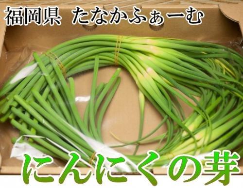 にんにくの芽 2kg(福岡県 たなかふぁーむ)無農薬野菜