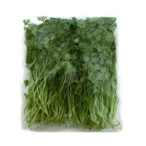 千葉県産 パクチー 生野菜 鮮度保持フィルム包装 500g ? 5kg 常温便