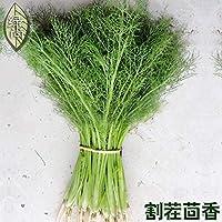 フェンネルオブ4シーズンフェンネル4シーズンズソウンガーデンテラス野菜盆栽100個