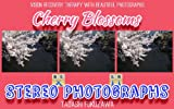 Cherry Blossoms / Stereo Photographs (English Edition)