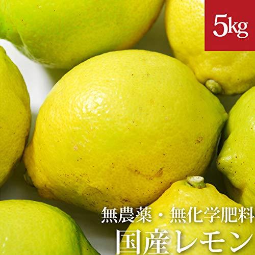 レモン5kg 無農薬・無化学肥料 愛媛県産 国産