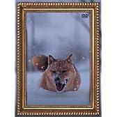 レオナルド犬プリオ(初回生産限定盤) [DVD]