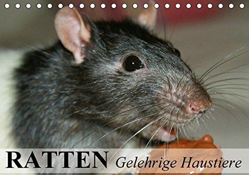 Ratten - Gelehrige Haustiere (Tischkalender 2017 DIN A5 quer): Von der Wanderratte zum geliebten Kuscheltier (Monatskalender, 14 Seiten )