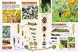DVD付 新版 昆虫 (小学館の図鑑 NEO) 画像
