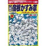 八重咲宿根かすみ草 (春、秋まき) (907)