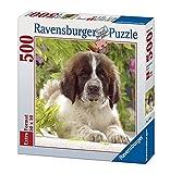 572ピース ジグソーパズル セントバーナードの子犬 Bernhardinerwelpe (50 x 50 cm)
