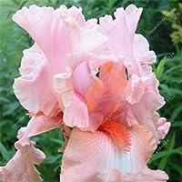 50個希少アイリス、アイリス種子、盆栽の花の種、24色、家宝アイリスTectorum多年生の花の種、家庭菜園のための植物