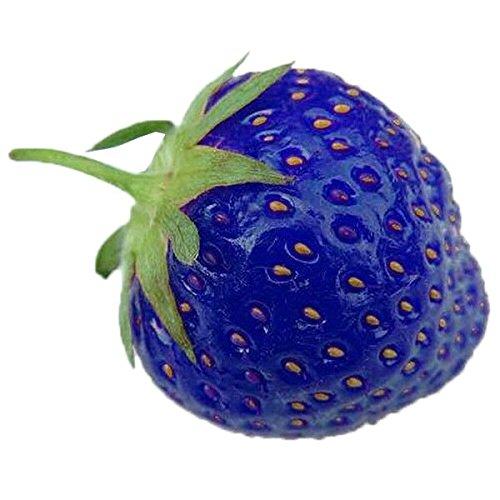 Rosepoem 100PCS天然有機ブルーストロベリー酸化防止種子珍しい植物と盆栽園の植物