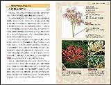 身近な雑草のふしぎ (サイエンス・アイ新書) 画像