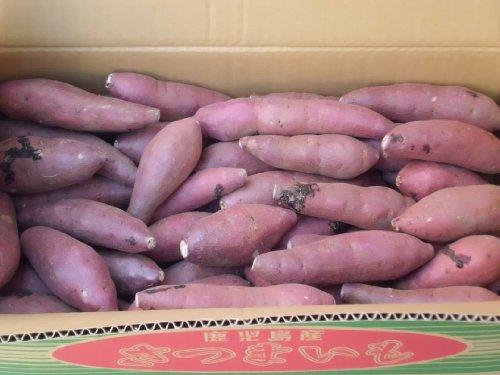 【新芋】鹿児島産 紅はるか (2S-Sサイズ) 5kg