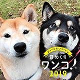 日めくりワンコ!2019年 犬の日めくりカレンダー