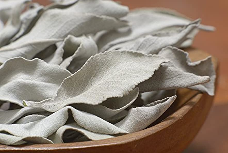 経歴の間で見習い最高級カリフォルニア産オーガニック ホワイトセージ 50g入り (葉+茎タイプ) 無農薬栽培 浄化用 スマッジング用として