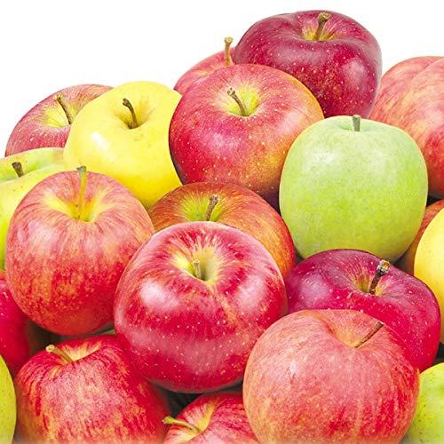 国華園 青森産 新物おまかせりんご 10�s1箱 りんご