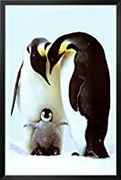 ペンギン家族フレーム入りポスター26x 38in