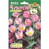 秋植え球根 チューリップ 切花用原種ライラックワンダー (236882)