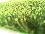 芝生マット 30cm × 30cm