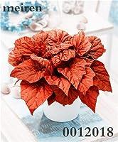 屋外の苗木家の庭の花のための200個のベゴニアの花盆栽花鉢植えBbonsaiガーデンコートヤードバルコニーコリウス:20