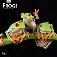 Frogs 2019 Calendar