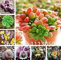 マルチカラー:セール!400ピース10種類盆栽リトープス種子100%本物の有機咲く花の種の庭の植物