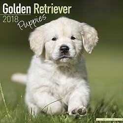 Golden Retriever Puppies Calendar 2018 (Mini Square)