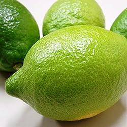広島県尾道市瀬戸田町産   防腐剤・防かび剤不使用   ご家庭用 わけあり(規格外品)  レモン 3kg