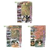 美女と巡る温泉三昧セット DVD3枚組 (1WeekDVD)