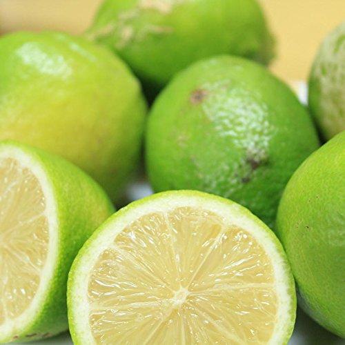 【訳あり】/国産レモン れもん 約10kg/愛媛県産(れもん)【ワックス・防腐剤不使用】